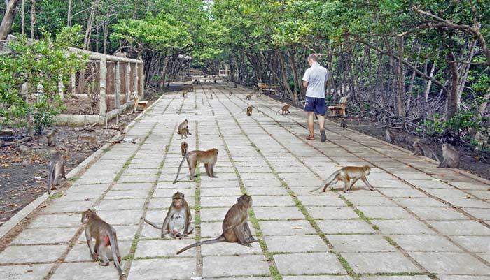 Обезьяний остров во Вьетнаме