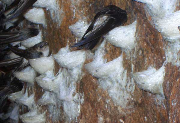Остров ласточек в Нячанге фото
