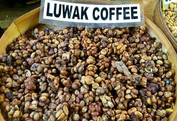 сколько стоит кофе лювак во вьетнаме