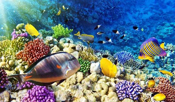 обитатели моря во Вьетнаме