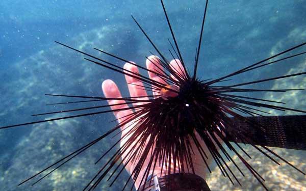 обитатели моря во Вьетнаме фото