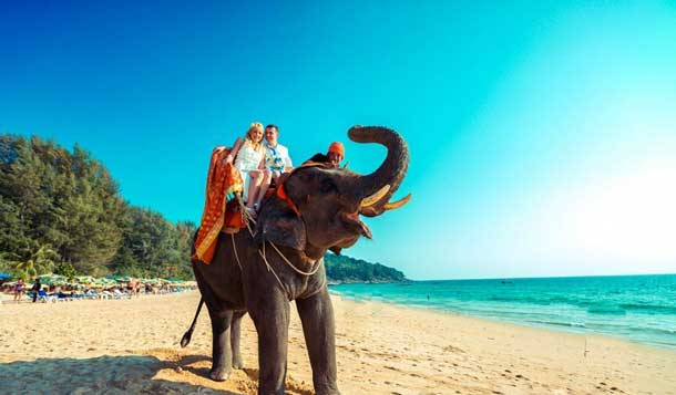 Прогулки в Пхукете на слонах фото