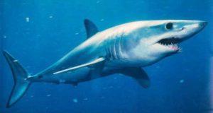 Есть ли акулы во Вьетнаме
