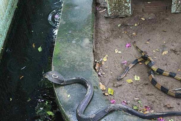 Змеиная ферма на Дельте Меконга
