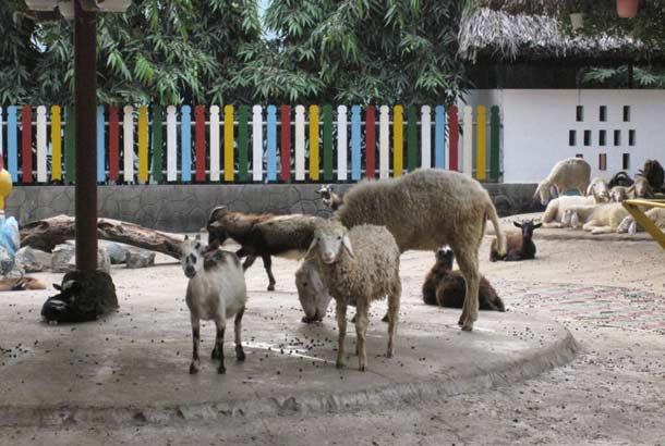 Хошиминский зоопарк
