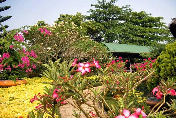 Фруктовые сады на берегах Дельты Меконга