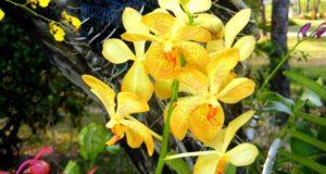 Остров Орхидей в Нячанге