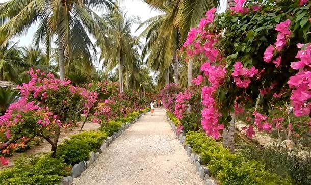 Остров Орхидей в Нячанге фото