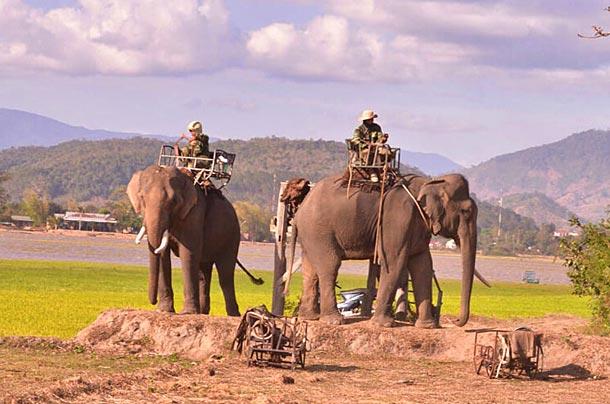 Катание на слонах в Даклаке