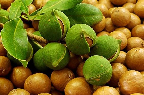 Орех Макадамия из Вьетнама