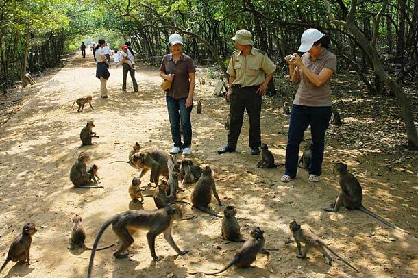 Остров обезьян (Hon Lao)