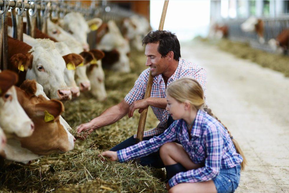 красивый хозяин с коровой картинка билет